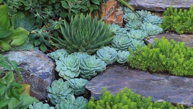 10 Attractive outdoor succulent garden ideas