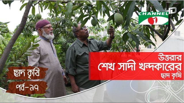 Rooftop farming | EPISODE 97 | HD | Shykh Seraj | Channel i | Roof Gardening | ছাদকৃষি |