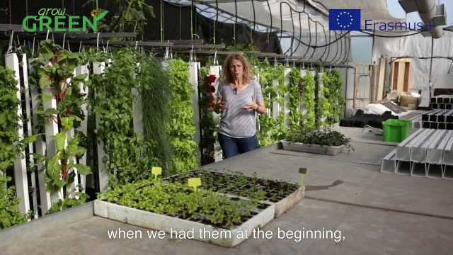 How to create vertical hydroponic gardens