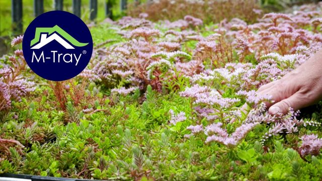 Wallbarn green roof solution – the M-Tray® – 'Nature at work'