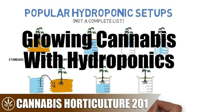 Intro to Growing Cannabis With Hydroponics
