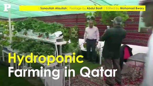 Hydroponic Farming in Qatar