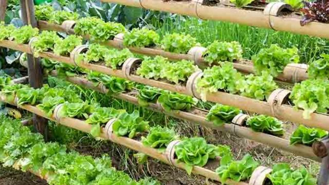 30+ DIY HYDROPONIC GARDENING SYSTEMS AND IDEAS