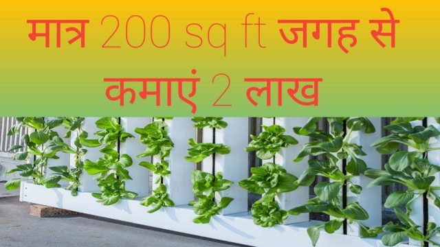 Hydroponic farming in India |  latest technology in agriculture