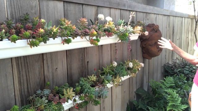 Lauras Tip of the Day DIY Succulent Holding Pen
