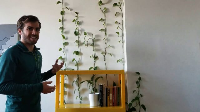 [UPDATE] Make a Living Wall from a Pothos Plant Pt  2