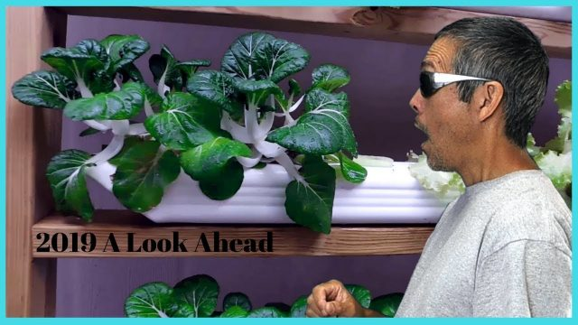 2019 A Look Ahead / Easy DIY Hydroponics