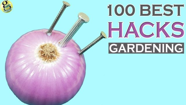 100 Best GARDENING HACKS AND IDEAS by Garden Tips – Beginners to Experts