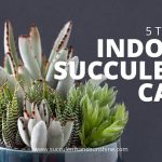 Indoor Succulent Care: 5 Tips for keeping your indoor succulents healthy