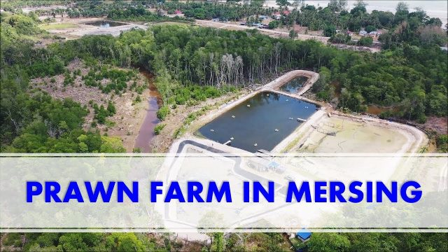 VISITING A PRAWN FARM IN MERSING!! | RAS Aquaculture