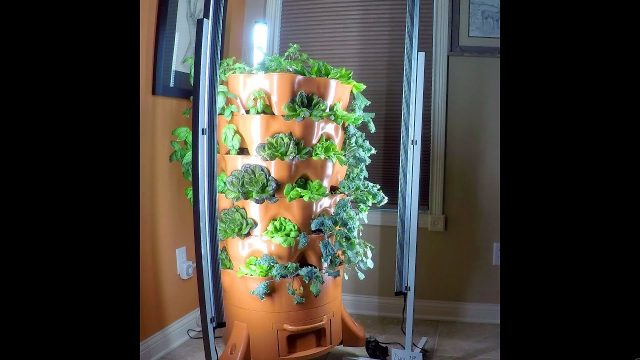 21 Days Growth: Garden Tower Indoor Time Lapse