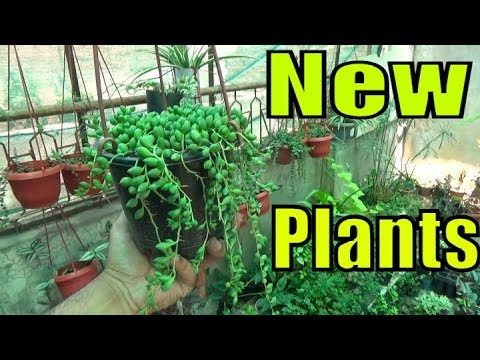 New Addition of Plants | Succulents – Flowering Vines