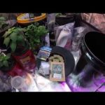 Planting a Hydroponic Herb Garden Herbs like Chives, Mint, Lavender Hydroponics for Beginners