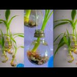 Lucky Bamboo Growing In Old Light Bulb   Wall Hanging Old Light Bulb Planter //GREEN PLANTS