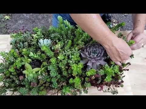 Wiring a vertical succulent garden