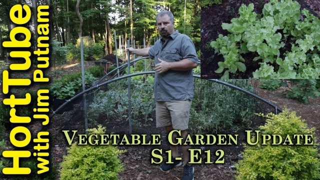 Vegetable Garden Update S1-E12 – Staking and Hail Hath No Fury