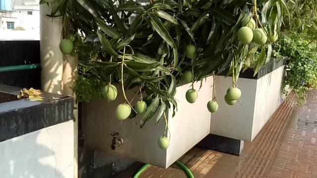 KHOSH BASH Rooftop Garden