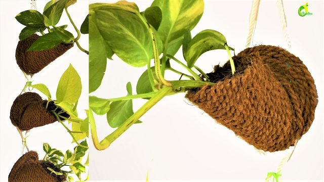 money plant /money plant wall decor,waste cd & coir rope ideas/organic garden