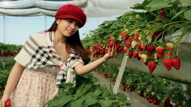 WOW!!! Amazing Agriculture Technology – Hydroponic Strawberry Cultivation