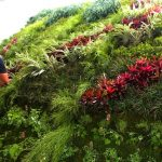 The benefits of living Green Walls 305