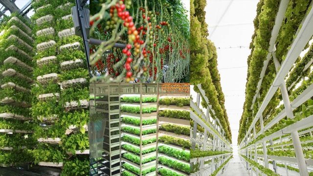 The Rise of High-Tech Indoor Farming Is Gaining Popularity Worldwide