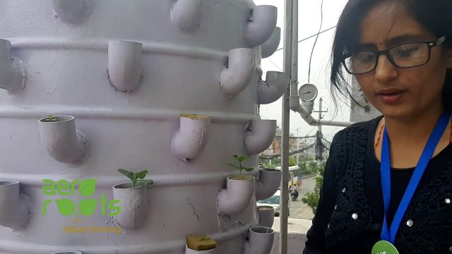 Transferring Soilless seedlings into Aeroponics Systems