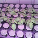 Australian Indoor Grow Room – Hydroponics with House and Garden Nutrients
