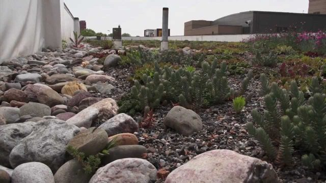 Green Roofs – Save It Lancaster