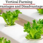 Vertical Farming  –  Advantages and Disadvantages – Modern Agriculture and Technology