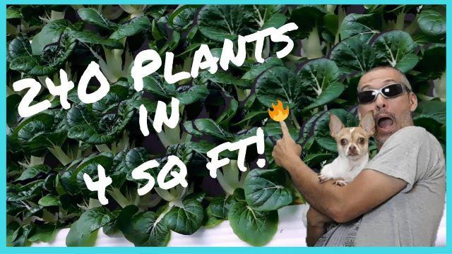 Grow 240 plants in only 4 sq ft / How I mix hydro nutrients/ Easy DIY Hydroponics
