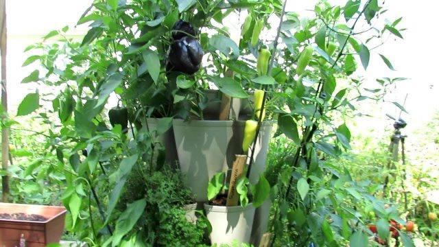 How to Grow 30 Pepper & Herb Plants in a 3×3 Foot Space: Vertical Container Gardening Basics