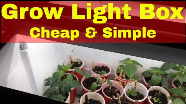 DIY Grow Light Setup For Indoor Gardening: Cheap and Simple