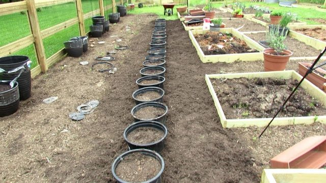 How to Build  A Sunken Container Vegetable Garden: All the Steps – Save Resource, Money & Grow More!