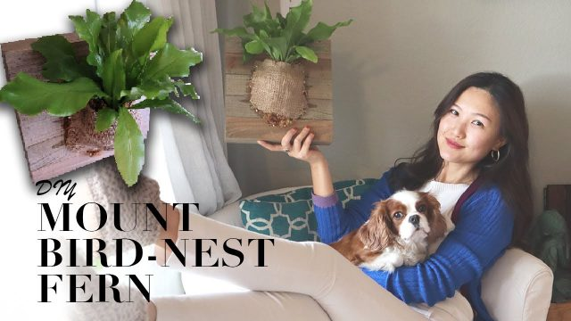 DIY with me | Plant Wall Art | Bird's Nest Fern