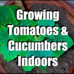 Growing Tomatoes and Cucumbers Indoors with Simple Grow Lights //  Growing Your Indoor Garden #6