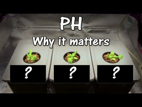 Growing Lettuce With Different PH Levels