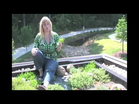 Sky Gardens – Greenroofs of the World: 4of4 – Rock Mill Park