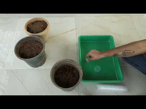 How to do seedling in hydroponic system.