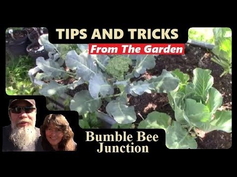 Vegetable Gardening 101 | Raised Bed Garden Ideas And Advice For Beginners