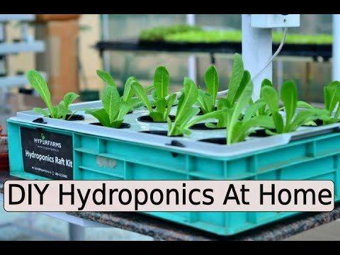 DIY Hydroponics At Home