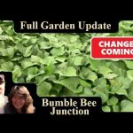 Full Raised Bed Garden Tour | Vegetable Gardening In Raised Beds Update