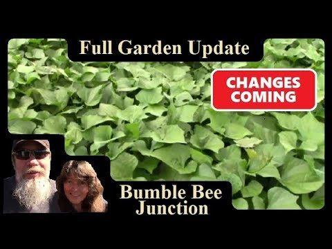 Full Raised Bed Garden Tour | Vegetable Gardening In Raised Beds Update