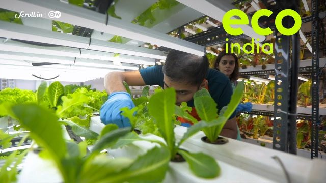 Eco India: The hyperlocal farm delivering freshly-harvested, leafy greens right to your doorstep