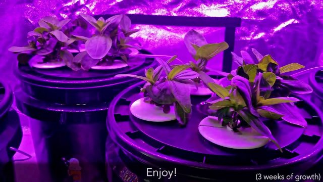 Complete Grow Tent w/ LED, Hydroponics, Ventilation under $500?!