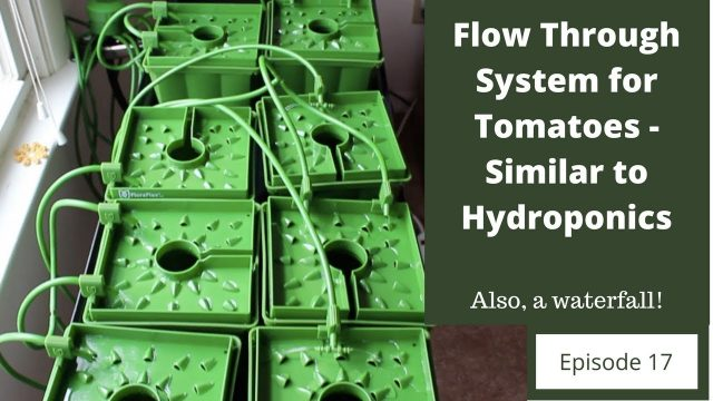 Flow Through System for Tomatoes – Similar to Hydroponics