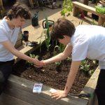 RHS School Gardening Team of the Year 2019 – Springhallow School (Finalist)