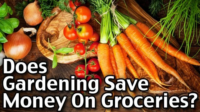 Does Gardening Save Money On Groceries?