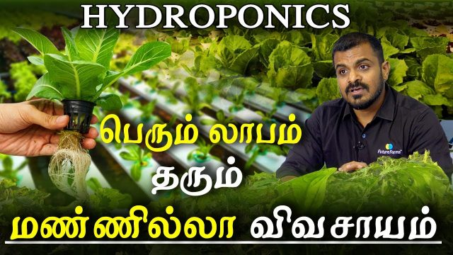agriculture and organic farming – hydroponic all you need to know profitable hydroponics in tamil