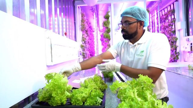 365dfarms Hi-Tech Hydroponic Farm @ Pune India