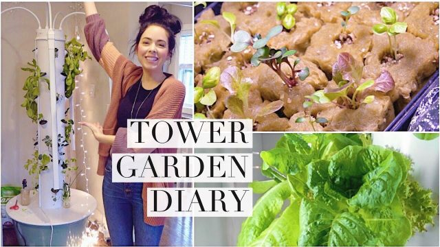 Garden With Me: Indoor Tower Garden Diary #3